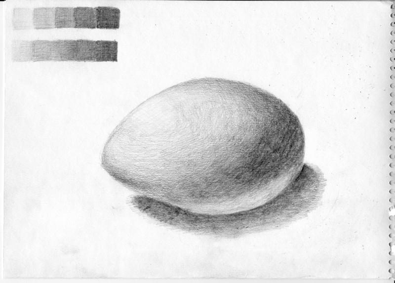 卵(二回目)です。