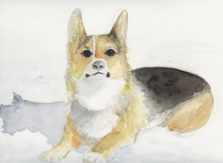 愛犬を描きました