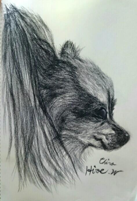 パピヨン犬「チロ」