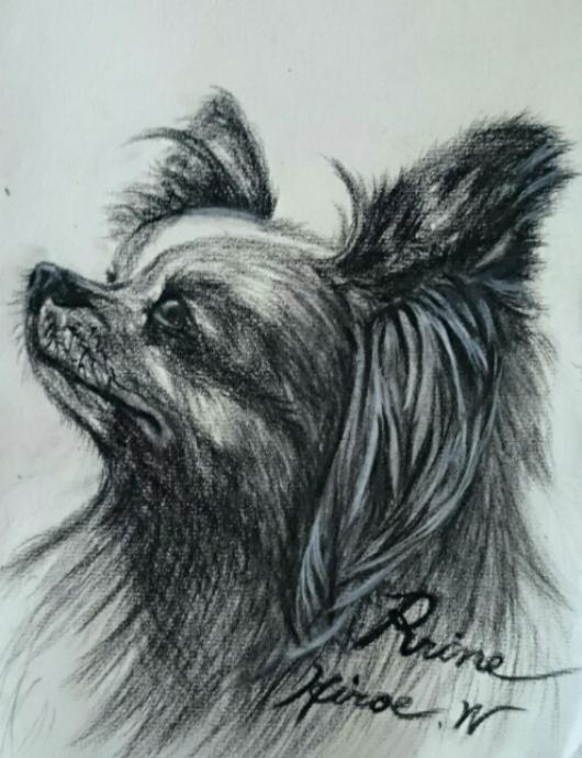 パピヨン犬「プリン」です。