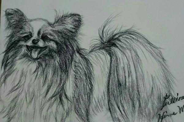 愛犬のパピヨン